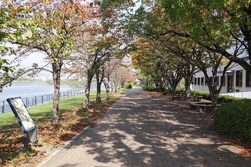 旧太田川(本川)沿いの河川敷